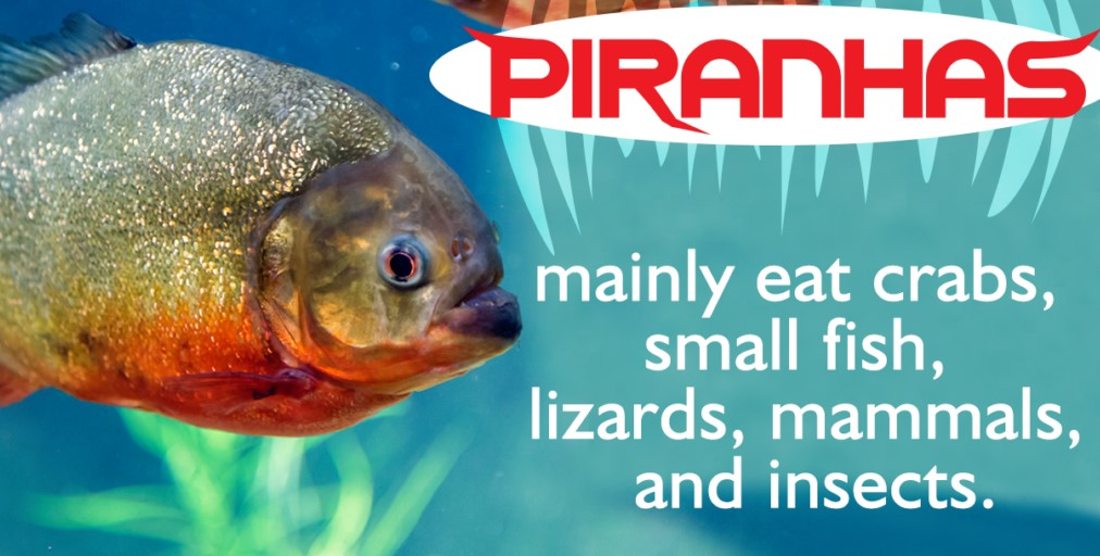 Characteristics of Piranha