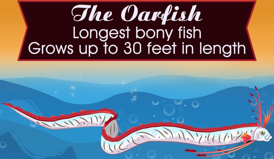 Oarfish Fun Facts